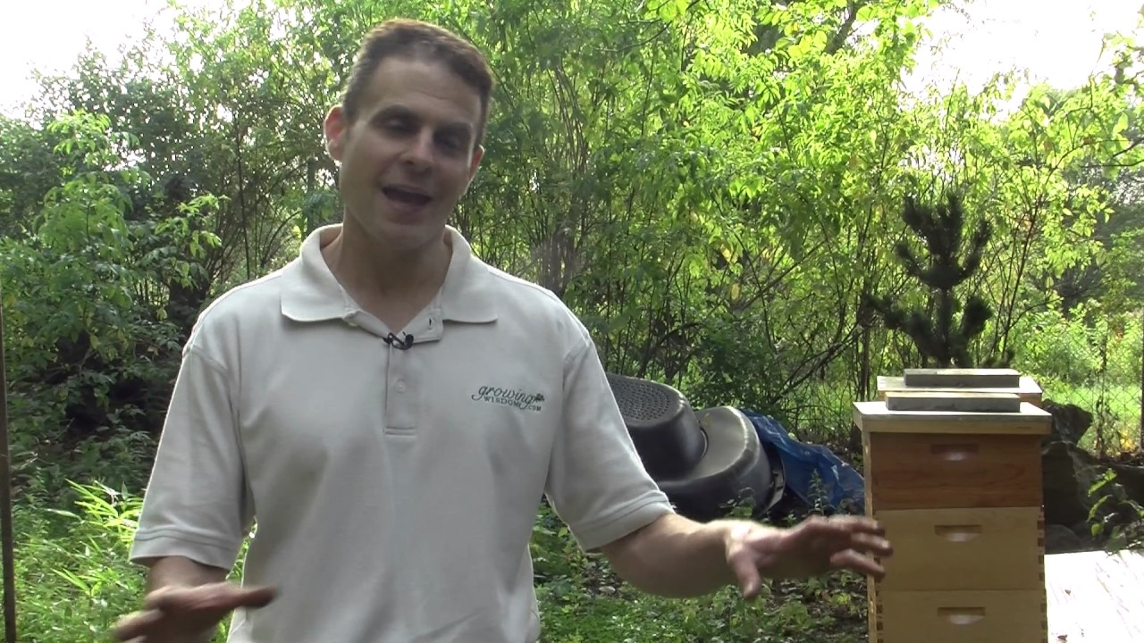 Can I Raise Bees In My Backyard raising bees in your yard - youtube