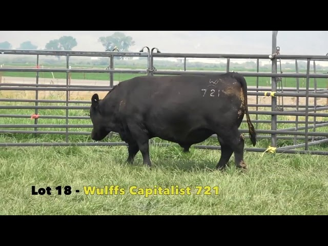 Black Gold Bull Sale Lot 18