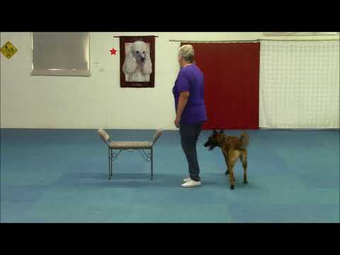 Keira's Canine Freestyle August 1, 2019