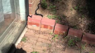 There's a Snake Near My House! Thumbnail