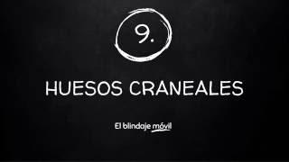 LOS RITMOS DEL CUERPO HUMANO | 8 - HUESOS CRANEALES