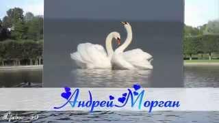 Андрей Морган Два лебедя