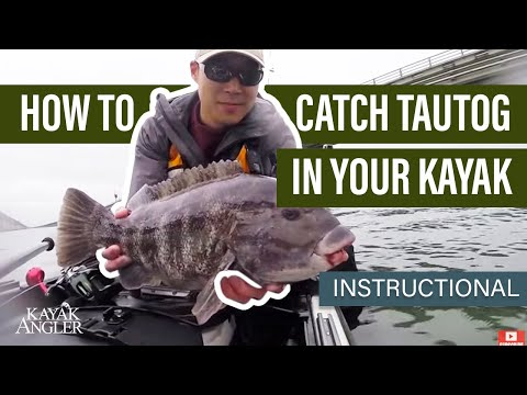 How To Catch Tautog In Your Kayak | Fishing Tactics | Instructional