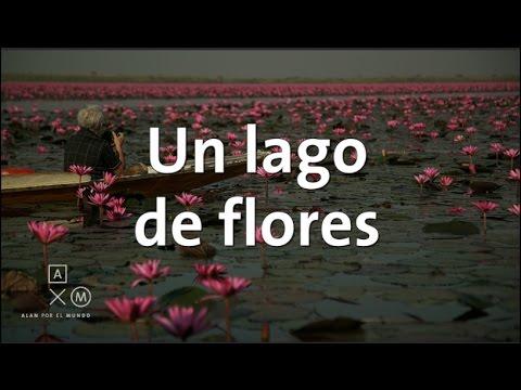 El espectacular lago de flores de loto | Tailandia #16