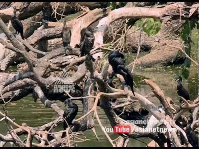 Intense heat in Kerala: പൊള്ളുന്ന വേനലില് വലഞ്ഞ് നീര്ക്കാക്കകള്
