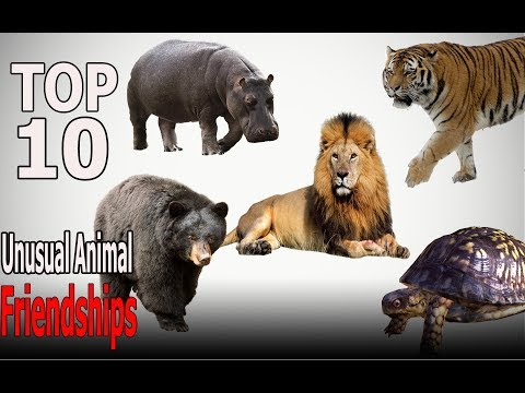 Top 10 Unusual Animal Friendships | Top 10 animals