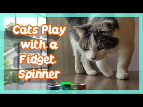 Cats Play with Fidget Spinner !