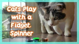 CATS PLAY WITH A FIDGET SPINNER ! ( Rainbow Fidget Spinner )