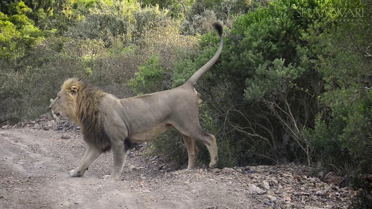 The Must-See Safari Animals in Africa - Shamwari