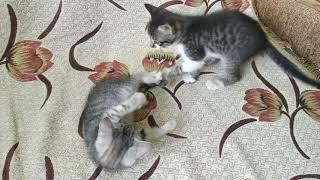 Кому котята? Харьков.