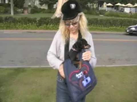 Pampered Pet Bag Pet Carrier & Dog Accessories Demo