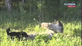 Кошка Спасает Ребенка От Собаки