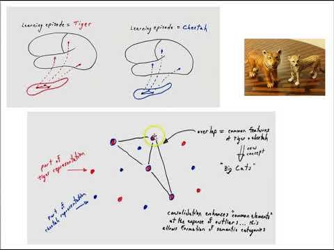 Semantic memory part 2
