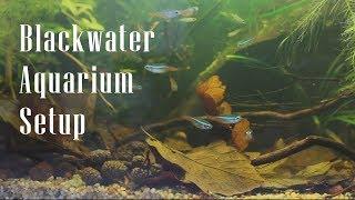 NanoBlackwater Aqaurium Setup - Biotope Aquascape
