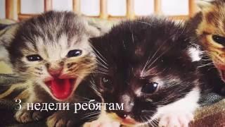 Котята, 3 недели от роду (30.04.16)...