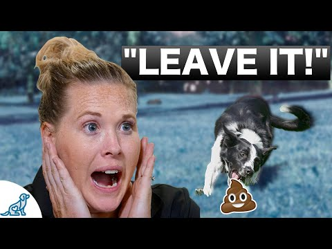 How To Teach Your Puppy To Leave It - Professional Dog Training Tips
