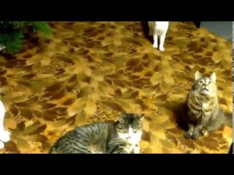 Привлечь внимание кота