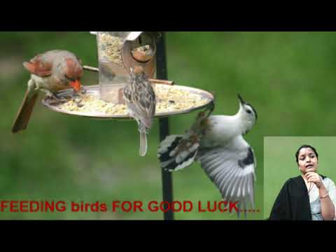 FEEDING BIRDS For Good Luck.....