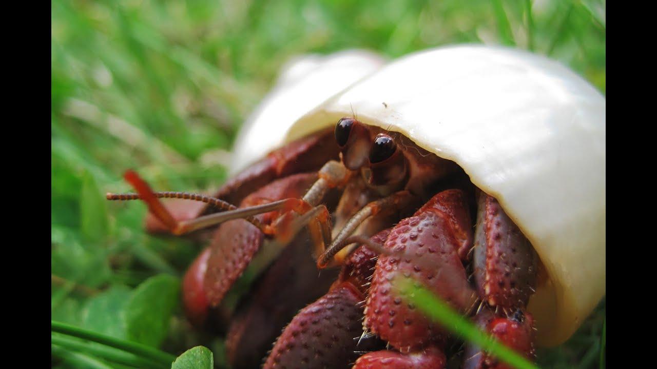 Diy Hermit Crab Tank Cheap Tank Decor Ideas Youtube