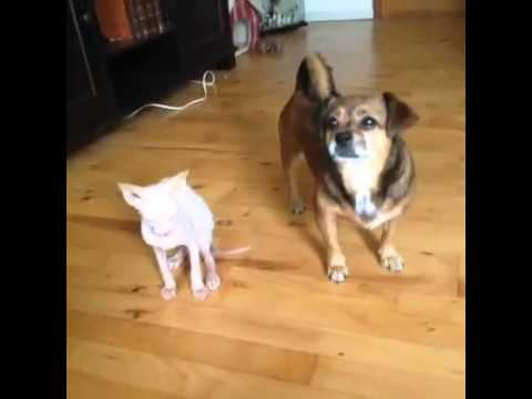 TopVineVideos: Who's Your Best Friend?
