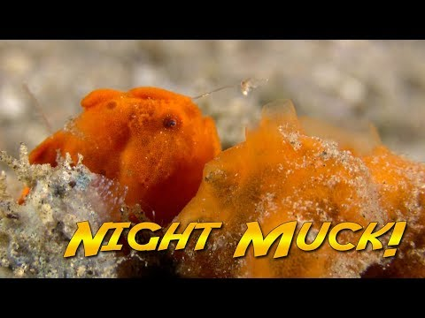 Philippines Muck Diving at Night! | JONATHAN BIRD'S BLUE WORLD