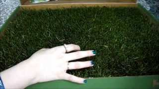 Doggie Lawn Unboxing & Giveaway | Grass Potty Pads