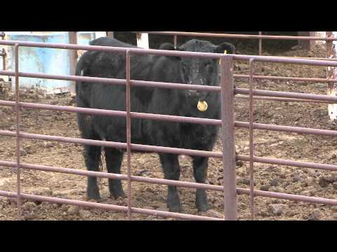Livestock Feed Intake and Efficiency - Market Journal - February 10, 2012