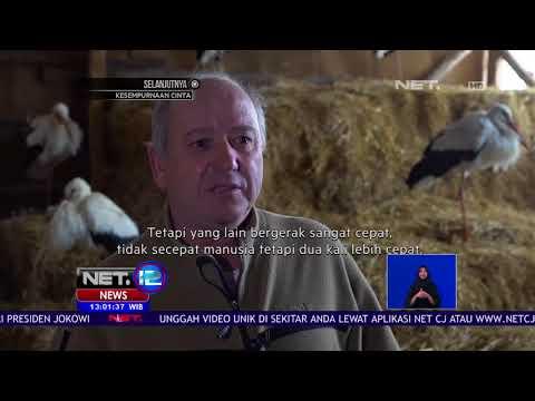 Ratusan Bangau Membeku Di Bulgaria - NET 12