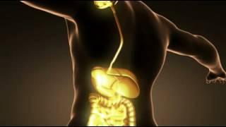 Özofagus – yemek borusu kanseri nedir Nedenleri   risk faktörleri nelerdir