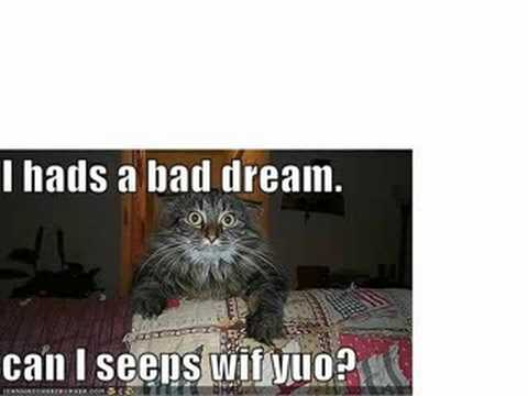 Funny animals pics with quotes by cutie293