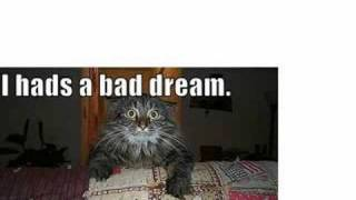 Funny animals with sayings