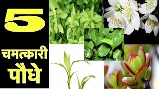 यह 5 पौधे लगाएं और होगी घर में धन की वर्षा | How to become rich in real life, Vastu