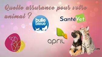 Quelle assurance pour votre animal ?