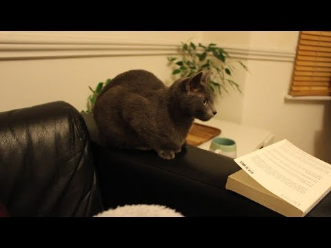 Watch Sophie (and Foster) Do Very Little