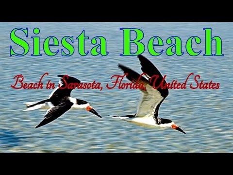 Visit Siesta Beach | Beach in Sarasota | Florida | United States