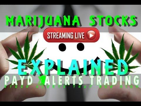 Marijuana Stocks Explained Live Day Trading
