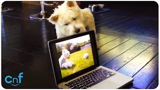 Westie Meets Cyber Puppies