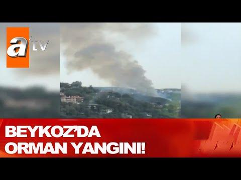 Beykoz'da orman yangını! - Atv Haber 26 Eylül 2020