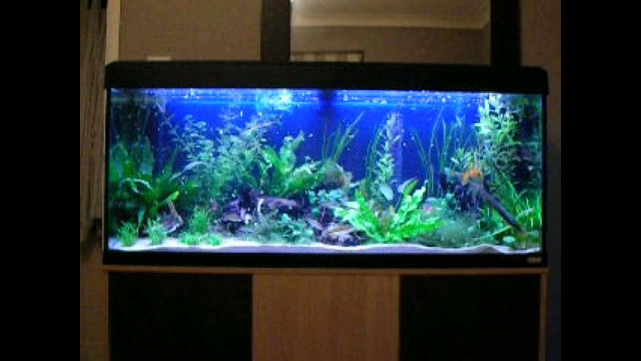 Tropical fish community tank feeding time youtube for Exotic fish tanks