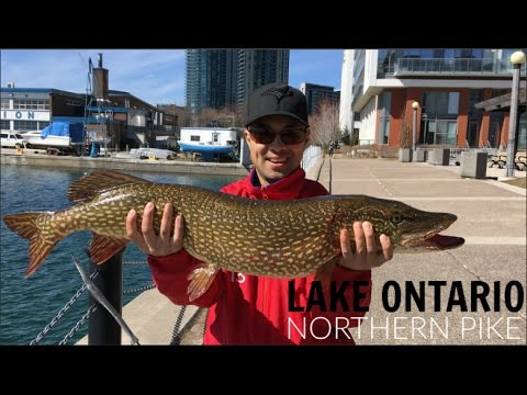 Toronto Shore Fishing - Lake Ontario Pike (March 21, 2017)