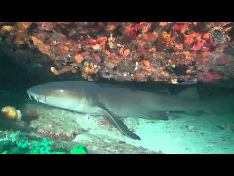 Diving in St. Eustatius with Scubaqua by Roland Rasner