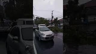 Download POHON TUMBANG di JL A YANI Sidoarjo, Melintang di Tengah Jalan