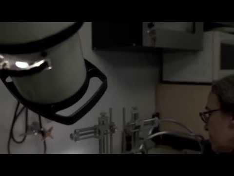 Video Abstract. Diaz-Mataix et al 2013 Current Biology