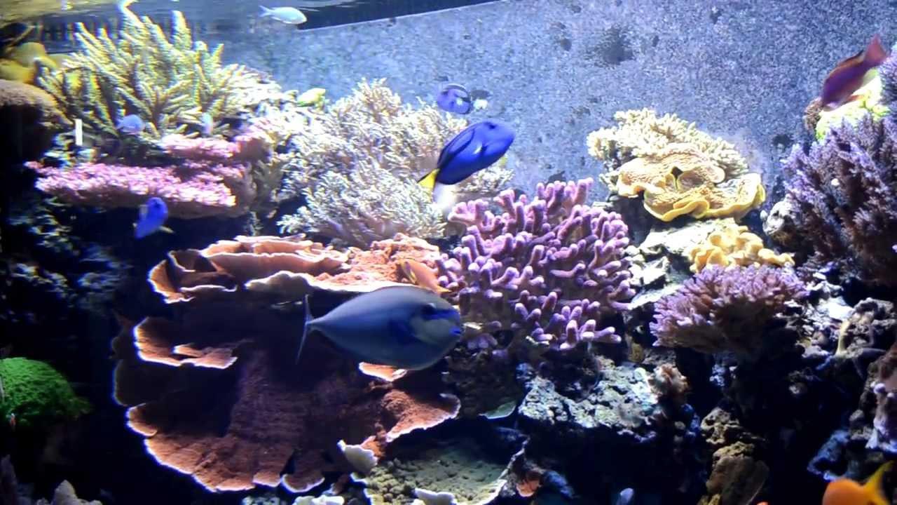 Saltwater aquarium at museum of natural history washington for Aquarium washington dc
