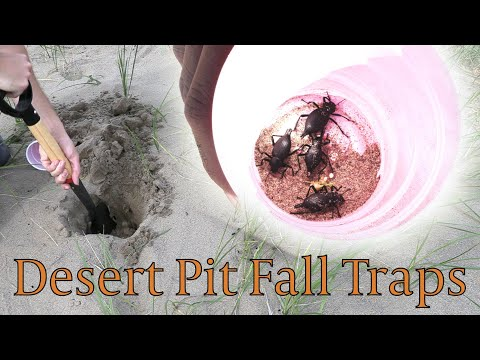 Pitfall Traps In Sand Dunes