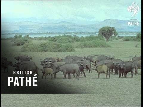 Modern Uganda (1961)