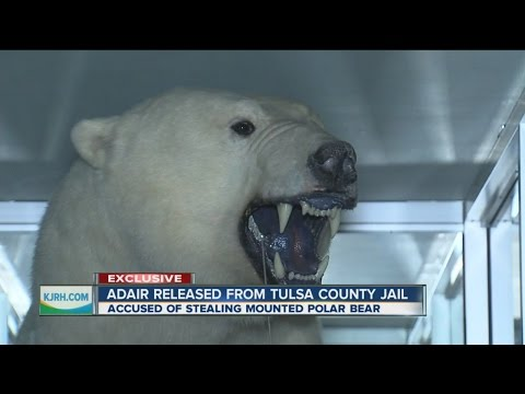 Man Accused Of Polar Bear Theft Released