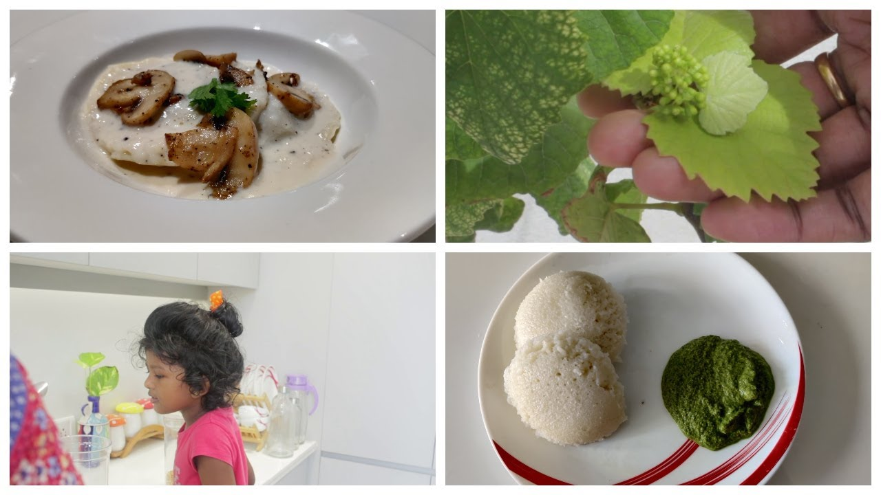 Ravioli - Craved food during pregnancy/Mint chutney/Grapes in our garden/Morning to night routine