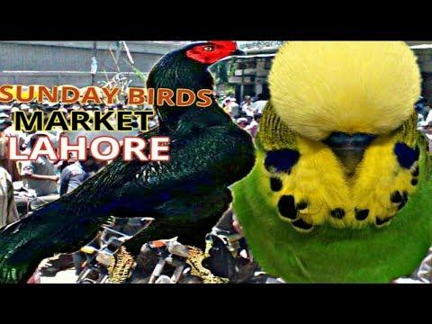 SUNDAY BIRDS MARKET LAHORE | SHALIMAR GARDEN