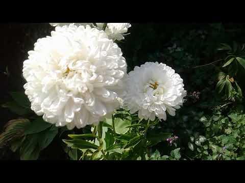 Цветы которые цветут в августе